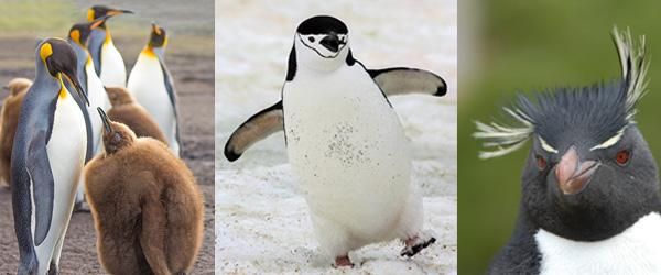 Get To Know Your Penguins